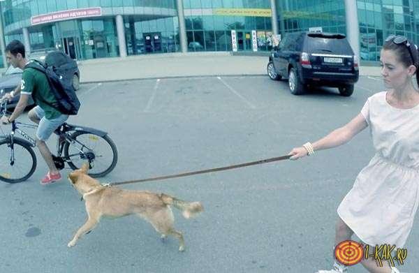 Пес кидается на велосипед