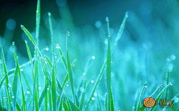 Конденсат на траве - влажность, роса